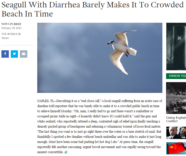 seagull-onion